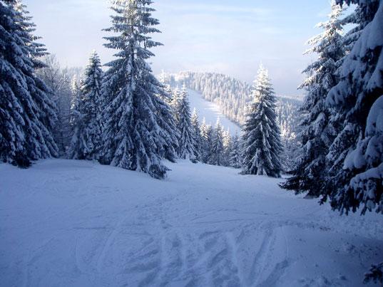 large_ski_15
